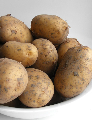 Goldrush Russet Seed Potatoes
