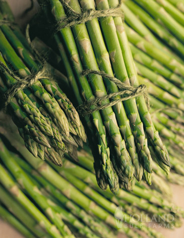 Mary Washington Asparagus 2yr - 75117