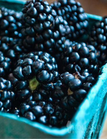 Darrow Blackberry Plant - 75119