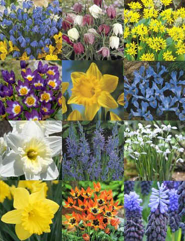 Naturalizing Fall Bulb Collection - 89108
