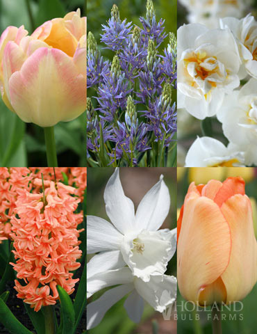 Fragrant Mix Collection