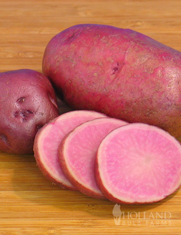 Adirondack Red Potato