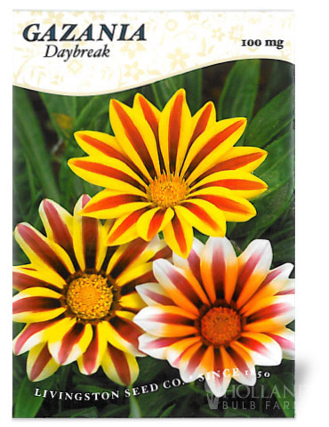 Gazania- Daybreak Tiger Stripes