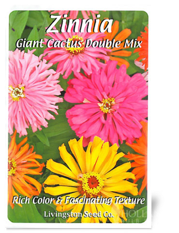 Giant Cactus Double Mix Zinnia