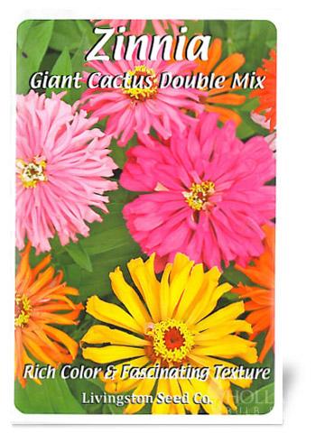 Giant Cactus Double Mix Zinnia