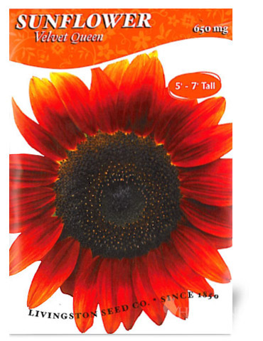 Velvet Queen Sunflower Seeds
