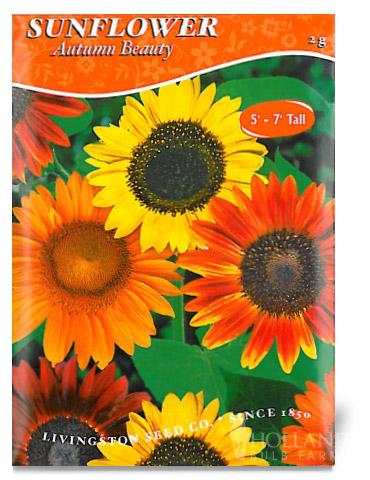 Autumn Beauty Sunflower Seeds