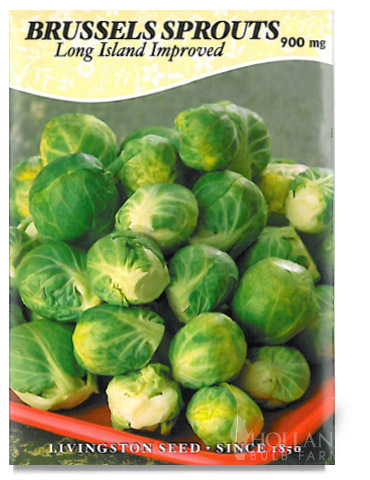 Long Island Brussels Sprouts Seeds