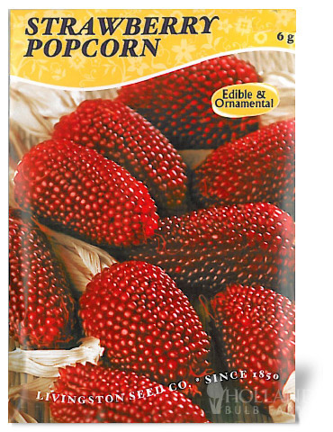 Strawberry Popcorn Ornamental Corn