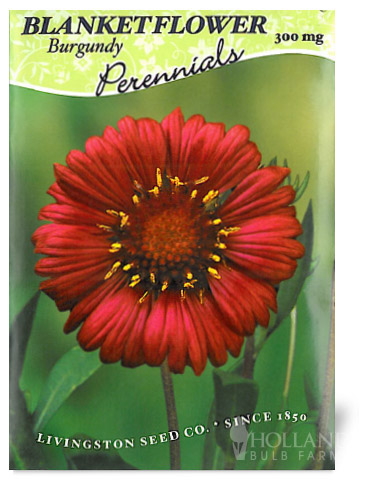 Burgundy Blanket Flower