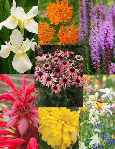 Perennial Butterfly Garden Collection - 77330