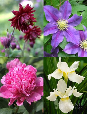 Late Spring Perennial Garden
