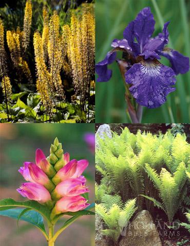 Best Perennials for Wet Soil
