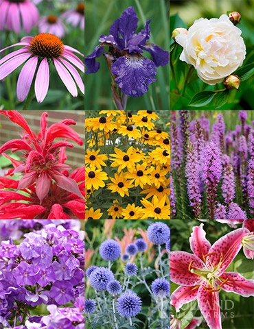 Perennial Cutflower Garden