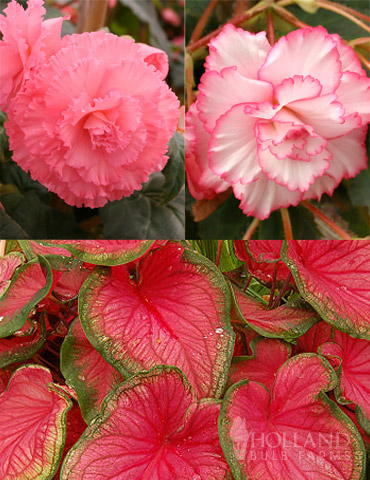 Fancy Frills Pink Shade Patio Collection