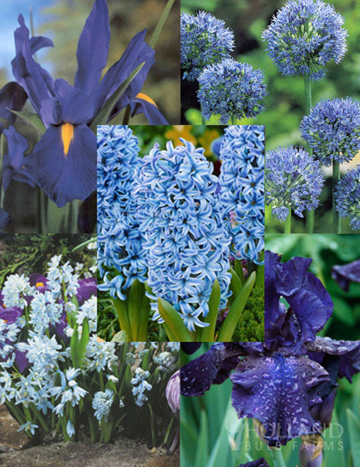 Blue Blooms in Spring Collection
