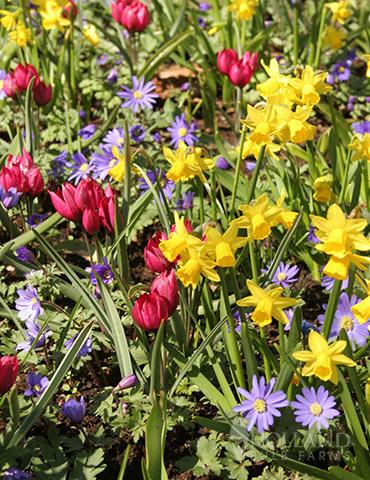 Celebrate Spring Blend
