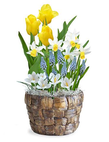 Spring Sensations Flower Bulb Garden