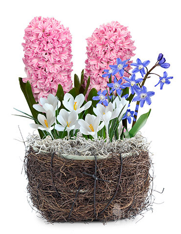 Fairy Wonderland Flower Bulb Garden