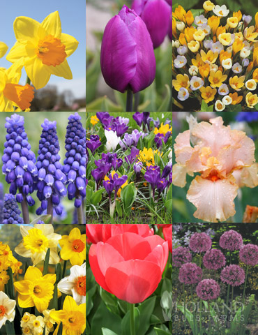 Non-Stop Spring-Blooming Bulb Collection