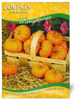 Pumpkin Jack Be Little