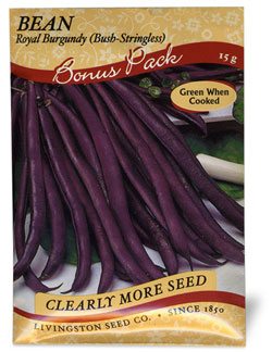 Bush Green Bean - Royal Burgundy