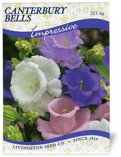 Canterbury Bells