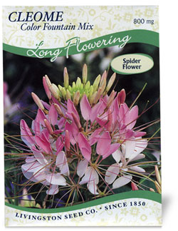 Cleome - Color Fountain Mix - 75590