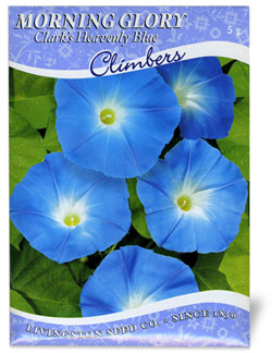 Clarks Heavenly Blue Morning Glory